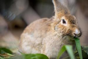 conejo bebé foto