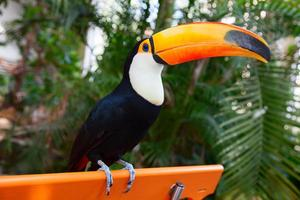Colorful tucan photo