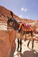 The donkey. photo