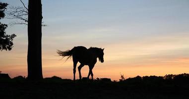 caballos foto