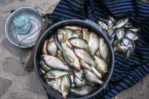 Fish from lake Atitlan at the market of San Marcos photo