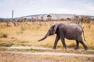 animales en kenia foto