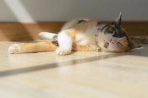 cats photo