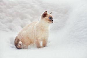 chat assis dans la neige