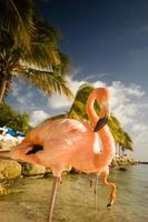 Two flamingos standing on a beach in Aruba