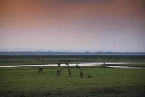 puesta de sol sobre el parque nacional gorongosa