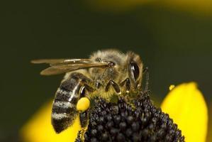 miel de abeja foto