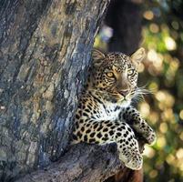 wildlife photo