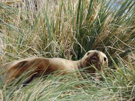 Relaxing seal in grass