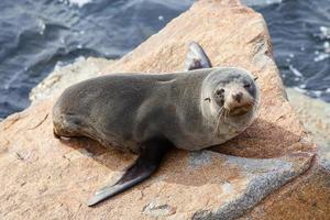 Narooma Seal photo
