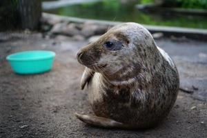 cachorro de foca foto