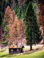 cabaña vieja