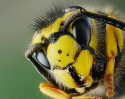 Head of wasp photo
