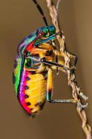 bug bijou