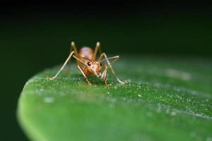 hormiga caminar sobre la hoja en el jardín