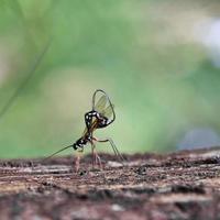 insecten zoeken naar voedsel.
