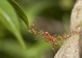 unidad de puente de hormigas