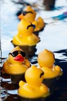 Five yellow rubber ducks floating in water