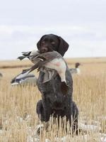 Dog with a Pintail