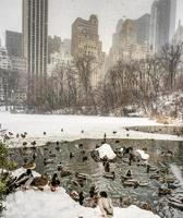 Central Park, New York City after snow