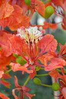 flor de pavo real foto