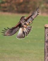 aterrizaje de aves foto