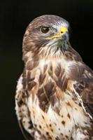 Bird of prey photo