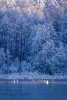 Winter frozen lake and forest at sunrise