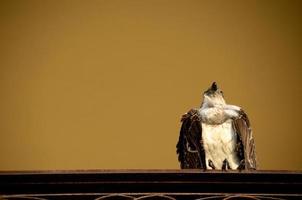 eagle on a railing