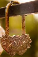 Lock heart swans. photo