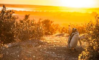 Early morning at Punto Tombo, Patagonia, Argentina