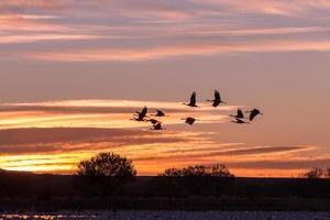 Sandhill Cranes at Sunrise photo