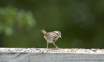 pájaro en el comedero foto
