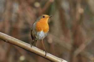 pájaros en una rama foto