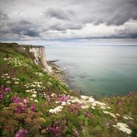 Bempton Cliffs photo
