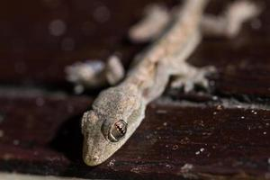 closeup lizard