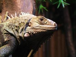 Reptile from zoo