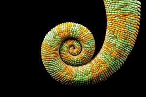 espiral foto
