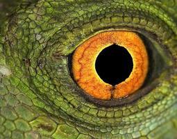jesucristo lagartos ojo