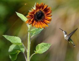 Hummingbird and Bee Races photo