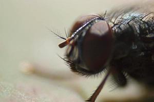 fly photo