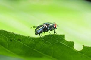 la mosca foto