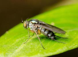 macro mosca insecto