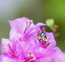 insect flying to flower photo