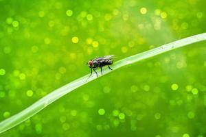 retrato de una mosca foto