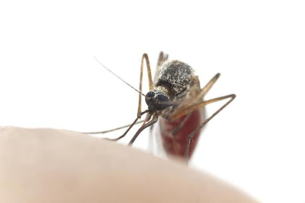 Blood sucking insect control