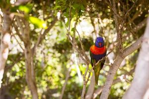 Bright parrot in Loro Park photo