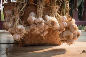 Garlics photo