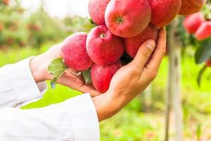 aantal appels op het Bodenmeer Duitsland