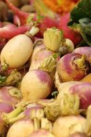 close up Radish in market photo